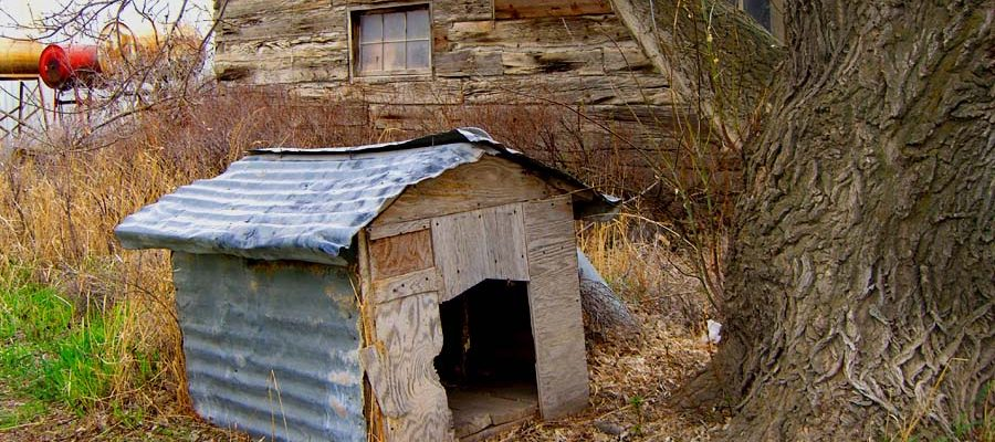thisOldDoghouse-900x400.jpg